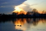 Sunset, ducks, tidal basin
